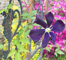 Purple Clematus on Grape Wrought Iron by ArtistJD