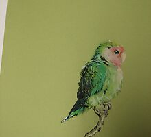 Peach Faced Lovebird by Wolfmother