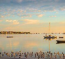 Golden Light - Victoria Point Qld Australia by Beth  Wode