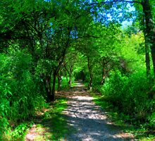 The Trail by Ron Waldrop