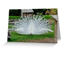 White Peacock II Greeting Card