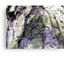 Wooden Earth. Canvas Print