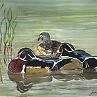 Wood Ducks  by Joan A Hamilton