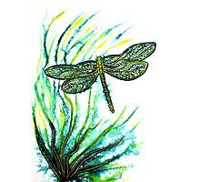 Echoes of Green - Dragonfly Photographic Print