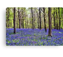 Knee Deep In Bluebells! Canvas Print