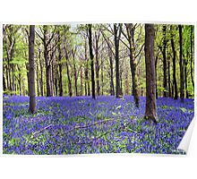 Knee Deep In Bluebells! Poster