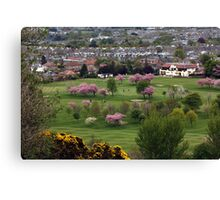 More Blossom on the green Canvas Print