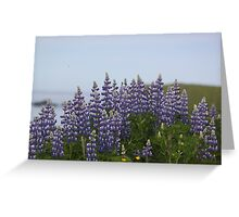 Lupine Flowers on a Cliffside Greeting Card