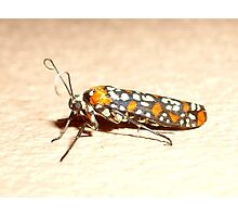 Tobagan Moth Photographic Print
