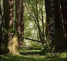 ~Tranquility Amongst the RedWoods~ by Kelly Normandeau