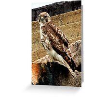 Perched Hawk Greeting Card