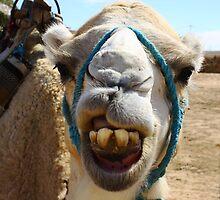 Smile Please - Camel in Sahara desert, Tunisia by Anne Kingston