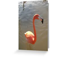 The eyes have one language everywhere Greeting Card