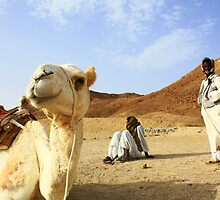 Camel and Bedouin boys, Wadi Gamal, Egypt by Anne Kingston