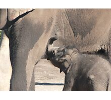At The Elephant Bar Photographic Print