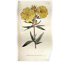 The Botanical magazine, or, Flower garden displayed by William Curtis V9 V10 1795 1796 0098 Oenothera Fruticose Shrubby Oenothera Poster
