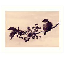 Flowered Finch Art Print