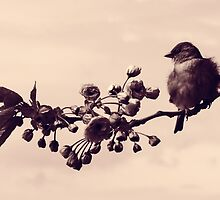 Flowered Finch by Sol Noir Studios