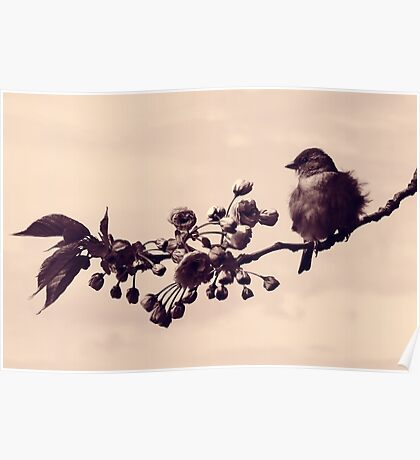 Flowered Finch Poster