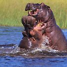 Hippo by the Throat by Owed To Nature