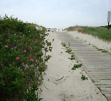 Pink Dune Flowers in Spring Lake, New Jersey by Michele Ford