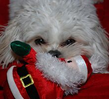 Buddy Has Santa For Christmas, what did you get? by Sharon A  Bunting