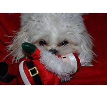 Buddy Has Santa For Christmas, what did you get? Photographic Print