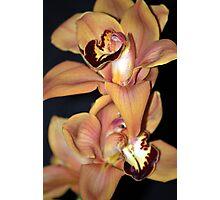 Extravagant Orchid Photographic Print