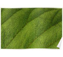 Leaf 0550 Poster
