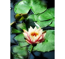 Light of the Lily Pond Photographic Print
