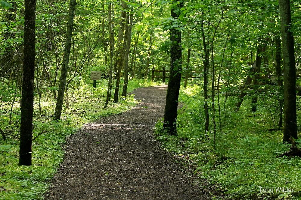 Path to Spring - Cincinnati Nature Center Ohio by Tony Wilder