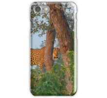 A Golden Spot between the Branches iPhone Case/Skin