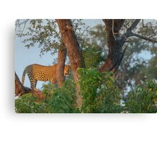 A Golden Spot between the Branches Canvas Print