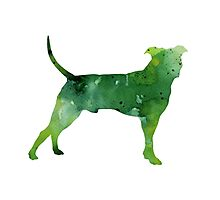 Abstract green pitbull watercolor painting Photographic Print