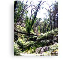 Brush -  Grampians, Australia Canvas Print