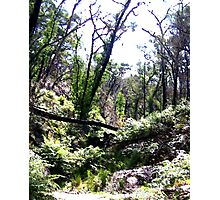 Brush -  Grampians, Australia Photographic Print