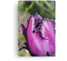 Clothed in purple and fine linen. Canvas Print