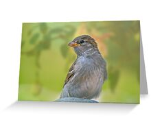 Sparrow in Spring Greeting Card