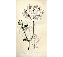 The Botanical magazine, or, Flower garden displayed by William Curtis V9 V10 1795 1796 0048 Pelargonium Echinatum Prickly Stalked Geranium Photographic Print