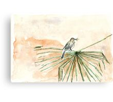 The Cape Wagtail thinks it's Spring! Canvas Print