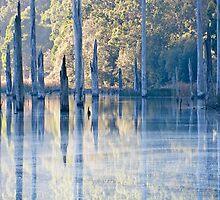 Lake Elizabeth,Otway National Park. by Darryl Fowler