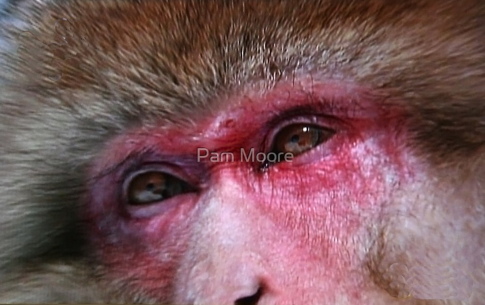 The Macaque Monkey by Pam Moore