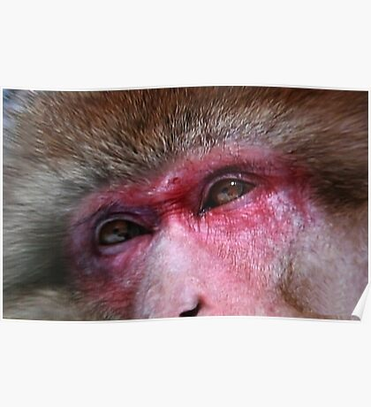 The Macaque Monkey Poster