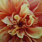 Dancing Curlz by Lozzar Flowers & Art