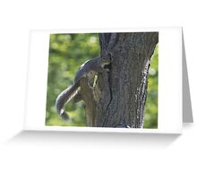 Squirrel mother and 2 babies Greeting Card