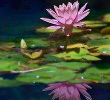 Pink lily reflected by Celeste Mookherjee