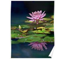 Pink lily reflected Poster
