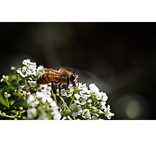A Bee Break- Boulder, Western Australia Photographic Print