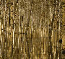 Birches in reflecting water, the sepia version by MiqeMorbid