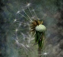 Dandelion with Textures by Dianne English